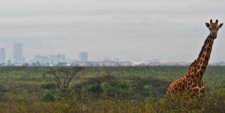 Save Nairobi National Park