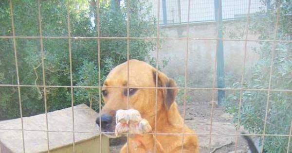 Μη διώξετε τα σκυλιά που φροντίζουν οι άνθρωποι της ΕΡΤ