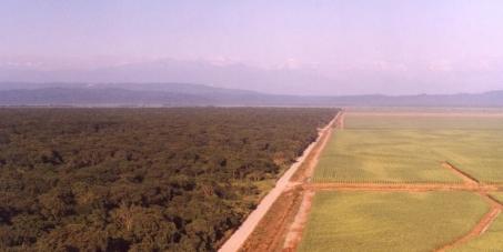 Gobernador de la Provincia de Jujuy, Argentina. Dr. Eduardo Fellner: Proteja el último relicto de bosque Chaqueño de Llanura de Jujuy