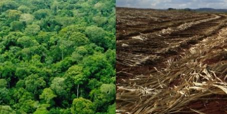 Cana-de-açúcar na Amazônia: NÃO!