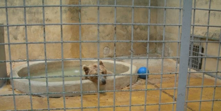Pour une amélioration des conditions de vie des animaux dans les zoos