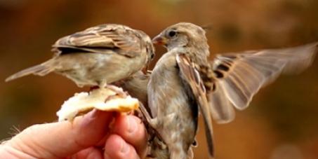 Madame la Ministre de l'Écologie: Abolition de l'interdiction de nourrir les oiseaux des villes !