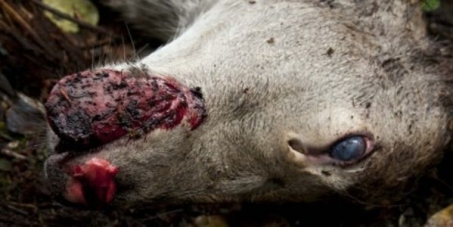 Stop Aerially Poisoning Animals in New Zealand