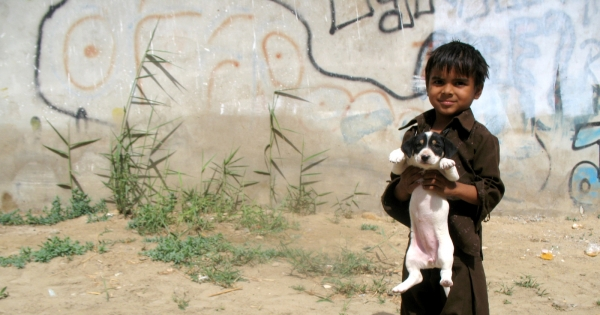 Adopt Humane Stray Dog Management in Pakistan