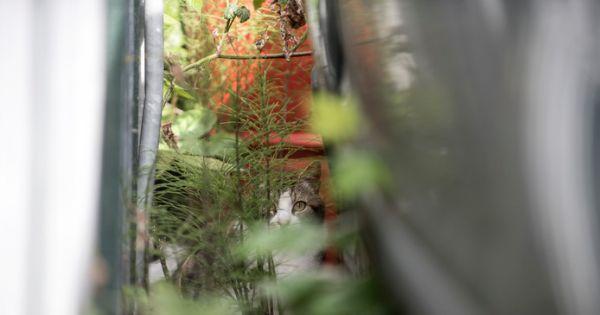 Provinciale Staten Zeeland: NEE tegen het afschieten van verwilderde katten in Zeeland