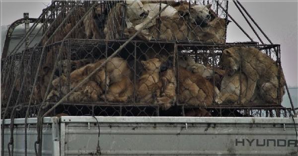 Haman, South Korea, Shut down the illegal dog farms!