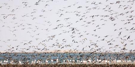 Cour Pénale Internationale de l'Environnement: Sauver le Parc National du Banc d'Arguin.