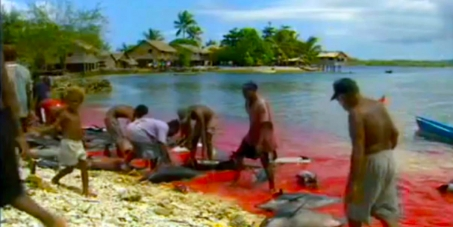 """Operation Trident"" to end the Dolphin Slaughter in the Solomon Islands"