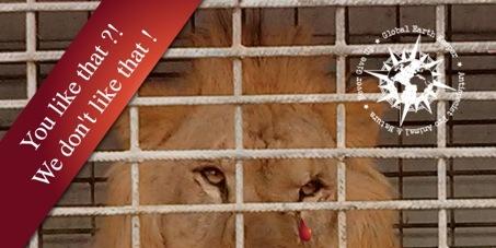 Messieurs les Préfets de Corse : Non aux Animaux dans les Cirques