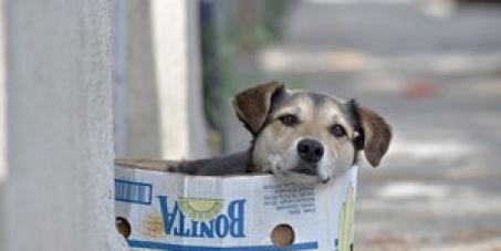 Contra a Execução de Cães de Rua na Romenia