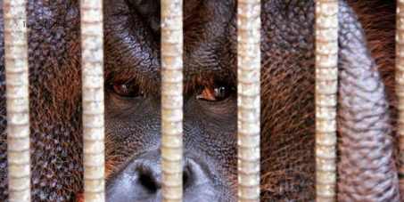 Rescue the Animals of Louis Zoo