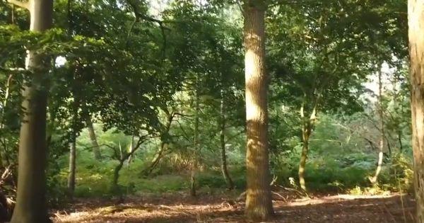 Red het Hooybergbos in Malle