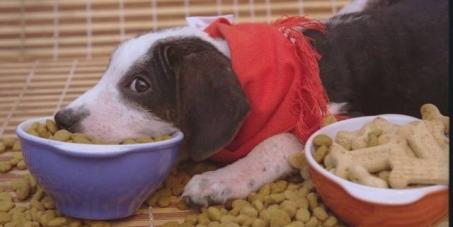 Queremos rações sem sofrimento e transgênicos, para os nossos animais