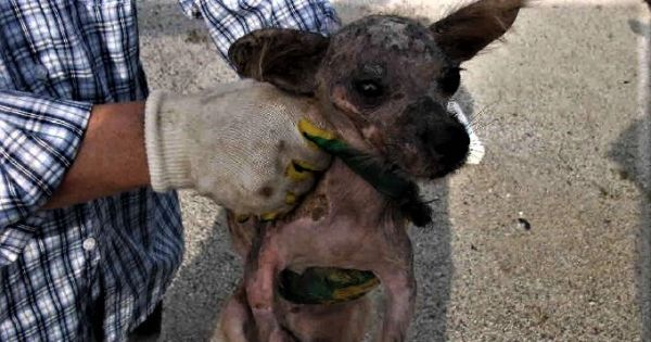 Animal Shelters in South Korea exposed as shameful money-making rackets?