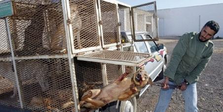Bloquons la loi anti-chiens au Maroc