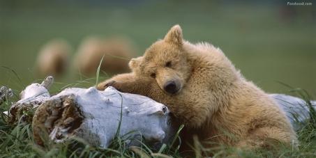 El mundo dice no a Metallica en Glastonbury por apoyar la caza de osos.