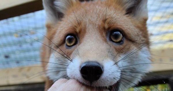 Υφυπουργός Περιβάλλοντος και Ενέργειας: Σώζουμε το ΕΚΠΑΖ - Κέντρο Περίθαλψης Αγρίων Ζωων Αίγινας