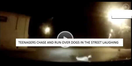 DOGS KILLED BY LAUGHING TEENAGERS IN A CAR, ON PURPOSE, THEY SHOULD BE HELD RESPONSIBLE