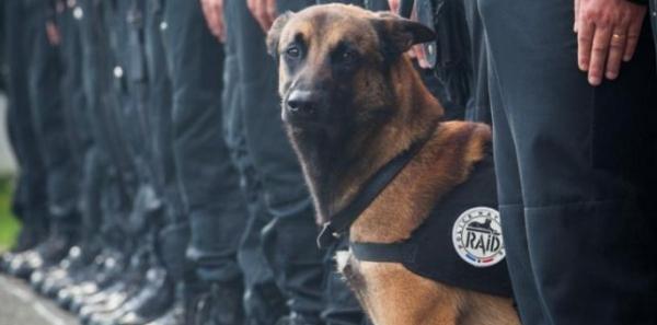 Bernard Cazeneuve, Ministre de l'Intérieur : L'arrêt de l'exploitation animale par le Ministère de l'Intérieur.