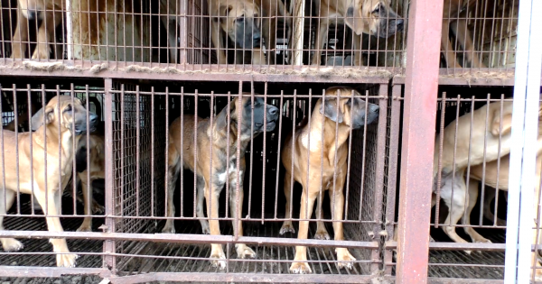 Uiryeong, South Korea, Shut down the illegal dog farms!