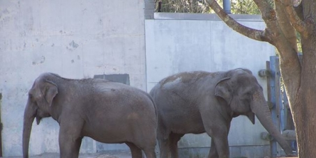 Jonathan Mitchell, Mayor of New Bedford, MA: Send the 2 elderly elephants Ruth and Emily to the sanctuary in Tennessee.