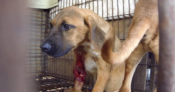 Gimcheon, South Korea, Shut down the illegal dog farms!