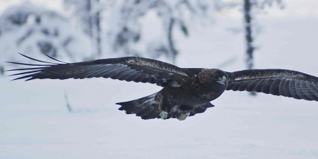 """Save the """"Eagle Valley""""!"""