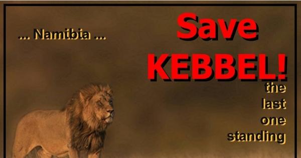 Minister Pohamba Penomwenyo Shifeta: Stop Namibian Lion Trophy Hunt