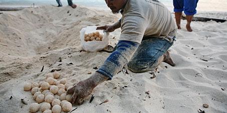 Save the Sea Turtles of Sangalaki!