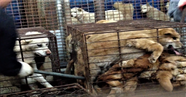 Gumi, South Korea, Shut down the illegal dog farms!