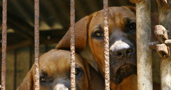 Hwasun, South Korea, Shut down the illegal dog farms!