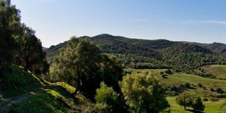 """Miguel Arias Cañete, Ministro de Agricultura, Alimentación y Medio Ambiente: No vendas La Almoraina, conocida como """"la última selva mediterránea"""""""