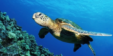 SAVE MALAYSIA'S SEA TURTLES