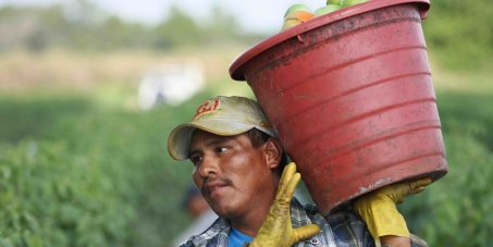 Wendy's CEO Emil Brolick : Commit to farmworkers' human rights in Wendy's supply chain!