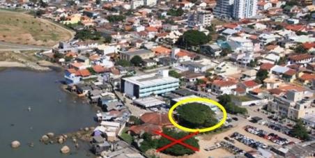 Apoie e assine - Ajude a Decretar Imune de Corte a #Figueira #Centenária da Ponta do Leal em #Florianópolis Eafe61f2d0a5d202b8bf60f0a13fa5b6