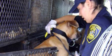 Ζητάμε την ίδρυση Ελληνικής Αστυνομίας για τα Ζώα / Establish Greek Animal Police