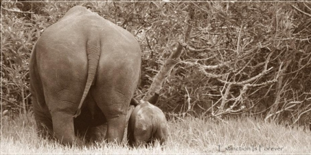 Save South Africa's Rhinos!