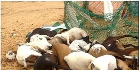 Sauver la Mauritanie de la Pollution Minière de KINROSS TAZIAZET et de MCM d'akjoujt