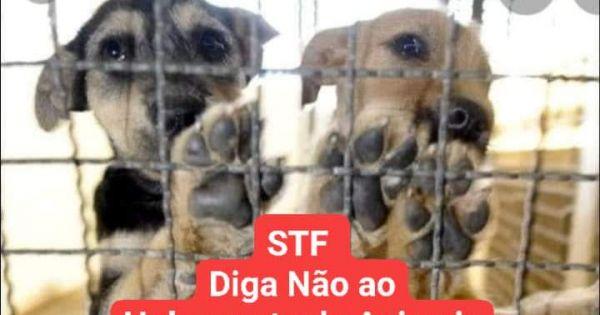 STF Diga Não ao Extermínio de Animais