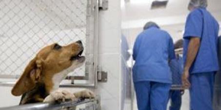 Contra o uso de animais pelo Instituto Royal