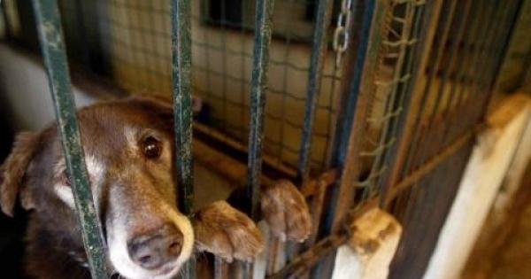parlamento europeu: para que os canis  de Portugal, sejam de esterilização e não de abate