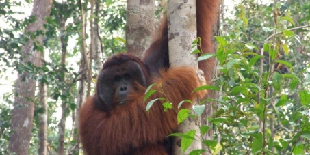 Stop the Oil for Ape scandal in Borneo