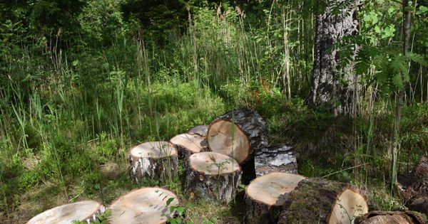 Genocide and ecocide should not be tolerated. Help us to save Klooga Forest!