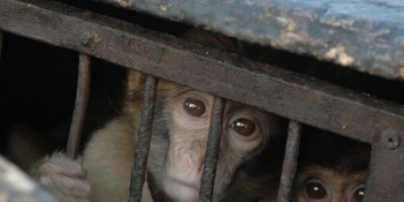 Pétition pour que cesse l'expoitation illégale despeces protégees