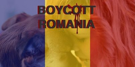 Boycott the request of Romania to enter in Schengen until it will solve in civilized mode the problem of strays