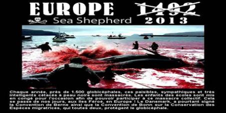 Le massacre de centaines de dauphins se perpétue dans les îles Féroé (Danemark)