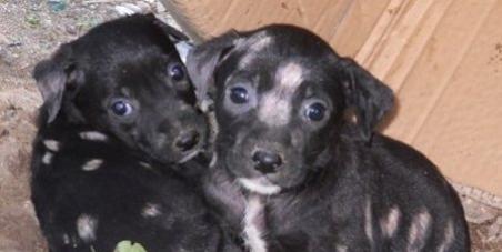 Stop au massacre des chiens et des chats. Guadeloupe = Roumanie
