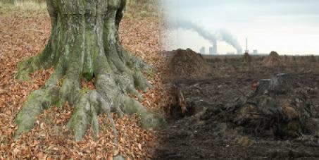 Stoppt die Zerstörung des Urwaldes Weißwasser