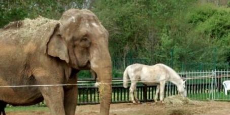 A l'attention : Monsieur le préfet de Beauvais  : Aidez nous à faire sortir Betty, une éléphante de sa prison