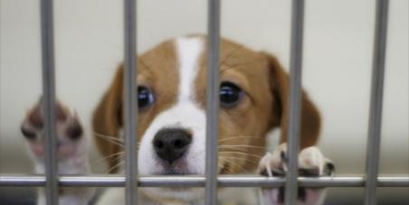 環境省: 日本にも「犬のおまわりさん」を!